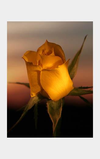 Romantic Flowers In Texas Find Beautiful Flower Arrangements